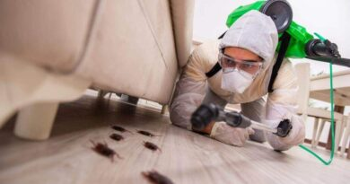 Questions to Ask Before Hiring A Pest Control Company
